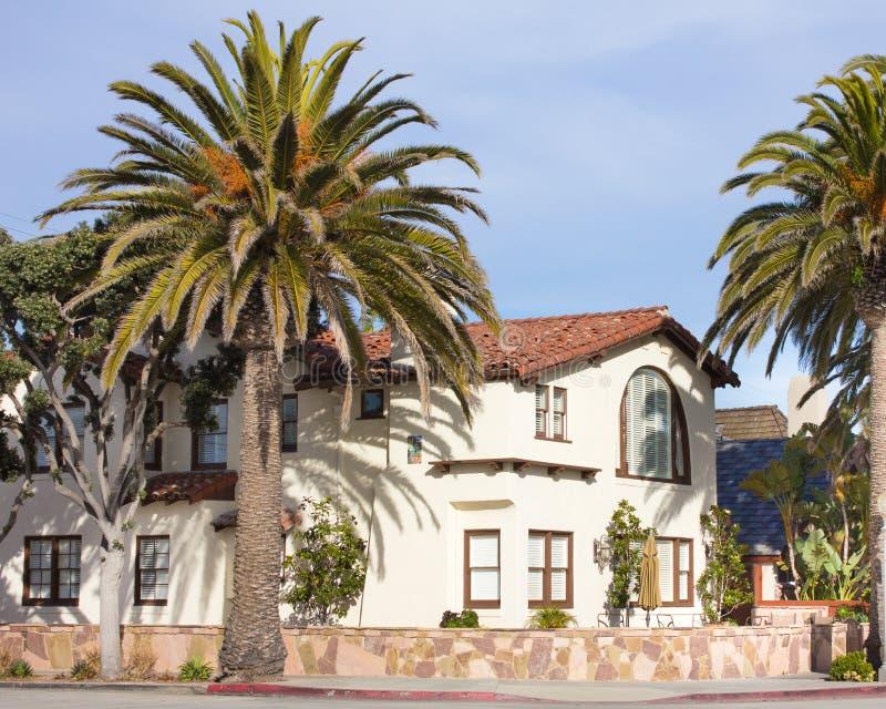 domowe palmy zdjęcie royalty free