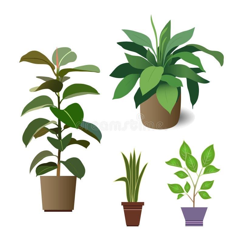 domowe rośliny royalty ilustracja
