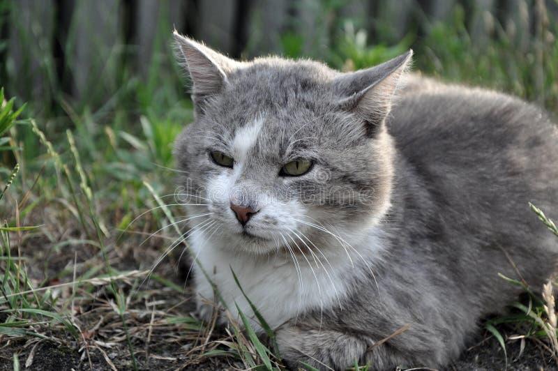 Domowego kota odprowadzenie w ulicie, patrzeje fotografia stock
