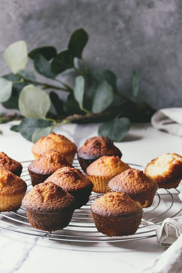 Domowej roboty cytryn muffins zdjęcia stock