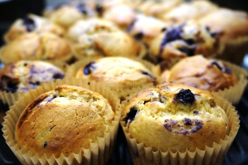 Domowej roboty cytryny i czarnej jagody muffins obraz royalty free