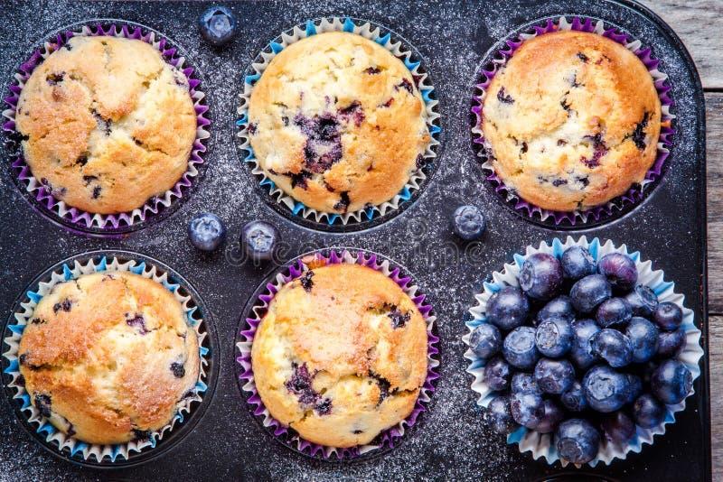 Domowej roboty czarnych jagod muffins z jagody zbliżeniem obrazy stock