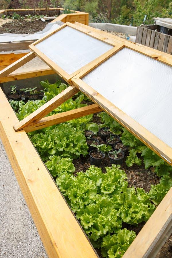 Domowej roboty szklarnia podnoszący ogrodowy łóżko zdjęcia royalty free