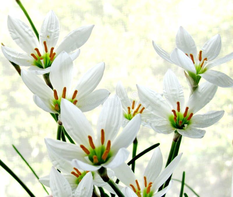 Domowi piękni kwiaty fotografia royalty free