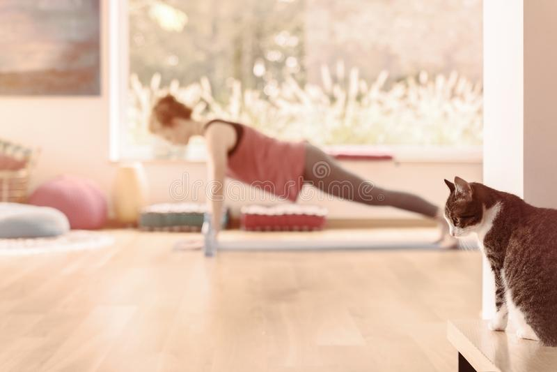 domowy ćwiczyć joga zdjęcie royalty free