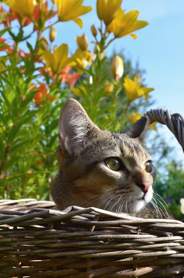 Domowy śliczny kot obrazy stock