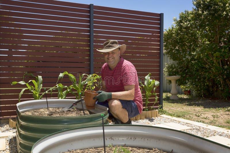 Domowy Jarzynowy ogrodnictwo fotografia royalty free