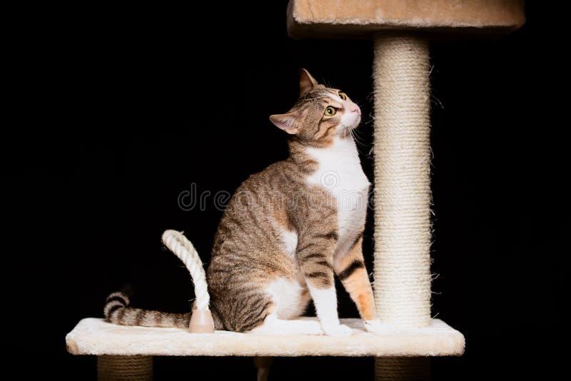 Download Domowy kot na kota drzewie obraz stock. Obraz złożonej z pasiasty - 28967435