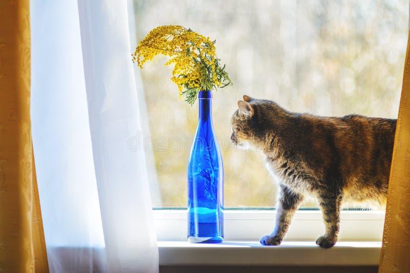 Domowy kot na Nadokiennym parapecie zdjęcia royalty free
