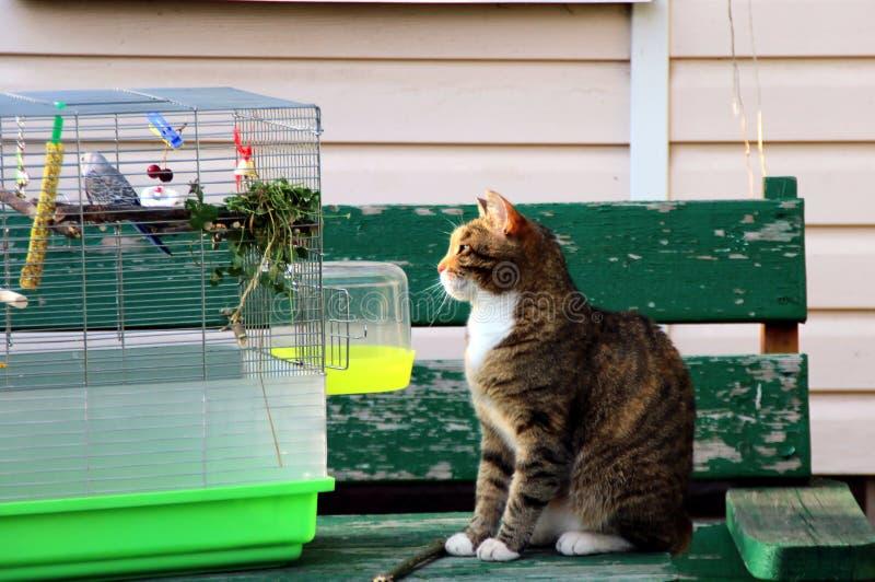 ce3cd7c0 Kot Papuga Obrazy Stockowe - Pobierz 343 Zdjęcia Royalty Free