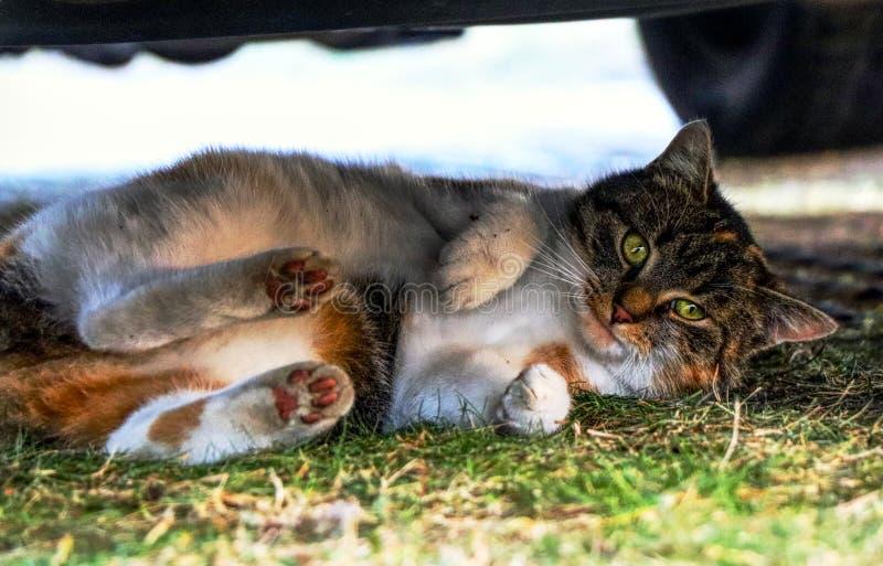 Domowy kot skupia się pod samochodem Ona bawić się z ja na kryjówce Wygrywałem fotografia stock