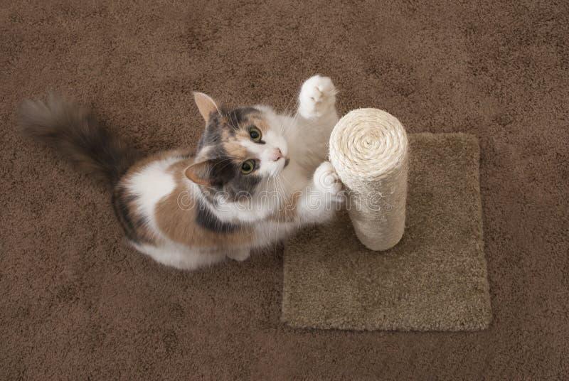 Domowy kot używać chrobotliwą poczta - krajobraz zdjęcie stock