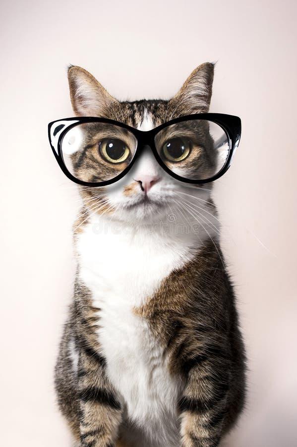 Domowy kot z eyeglasses zdjęcie stock