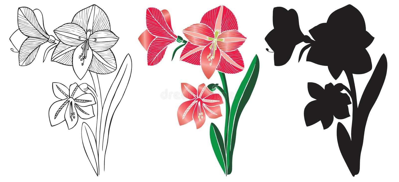 Domowy leluja kwiat ilustracja wektor