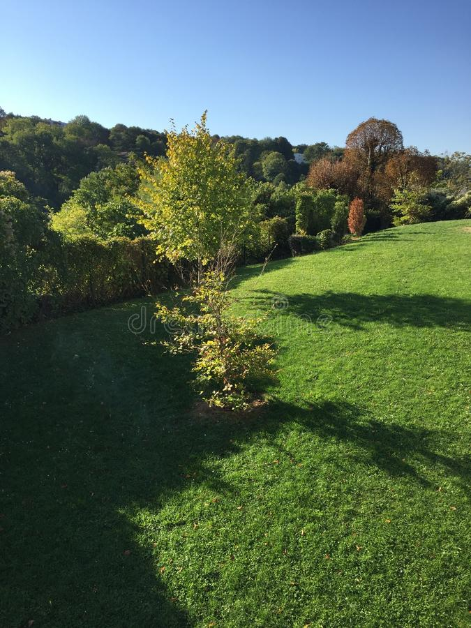 Domowy ogród obraz royalty free