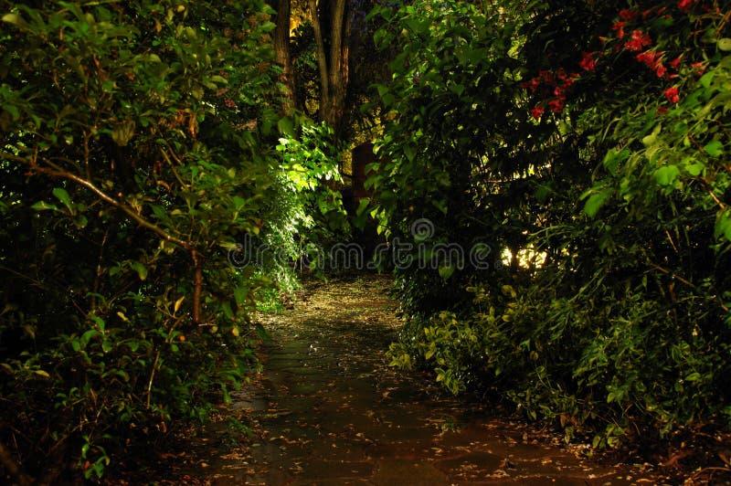 Domowy ogród nocą zdjęcia royalty free