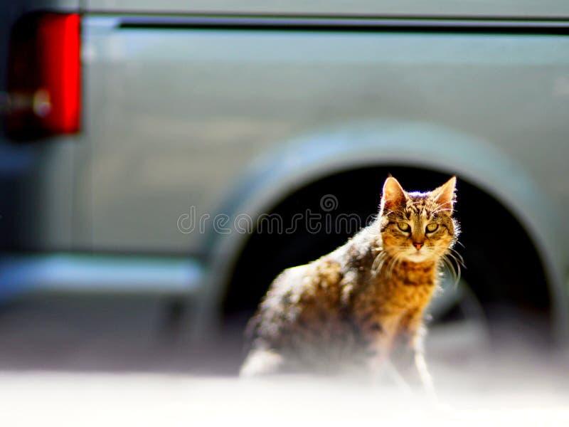 Domowy puszysty kot wygrzewa się w słońcu, zbliżenie strzał obrazy royalty free