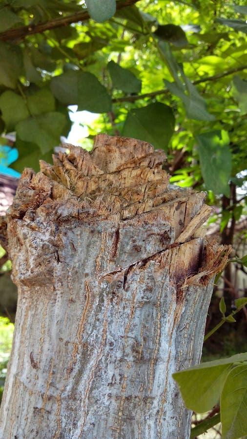 Don& x27; árvore do corte de t fotografia de stock