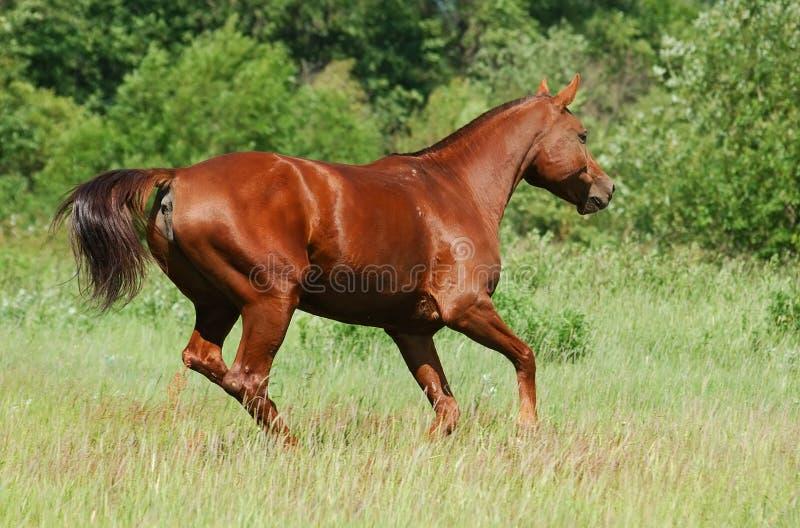 Don-rote Kastaniestute lizenzfreie stockfotografie