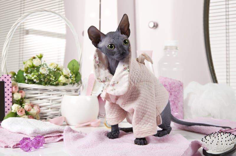 Don Sphinx-pot gekleed in pyjama stock fotografie