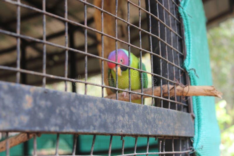 Don& x27; t önskar att cageds royaltyfri foto