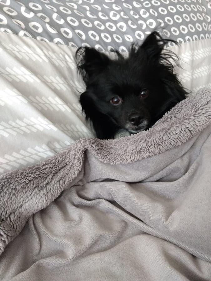 Don& x27; t me molesta I& x27; perrito el dormir de m fotografía de archivo libre de regalías