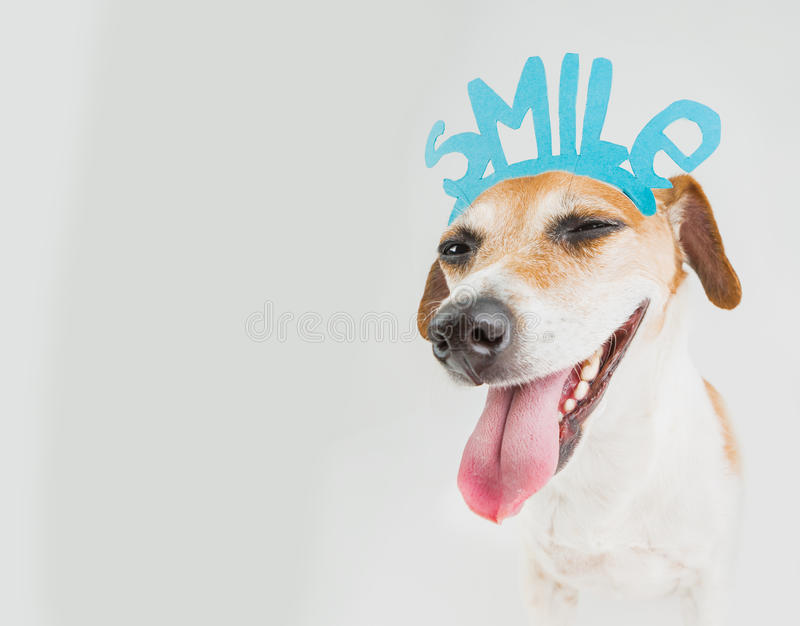 Don't worry be happy smiling dog portrait royalty free stock photos