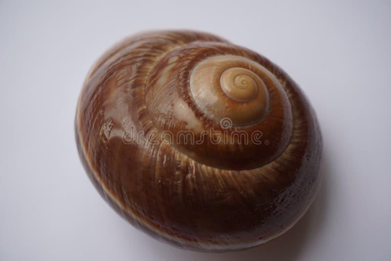 don, zbierania zna moją skorupę ślimaka t, fotografia stock