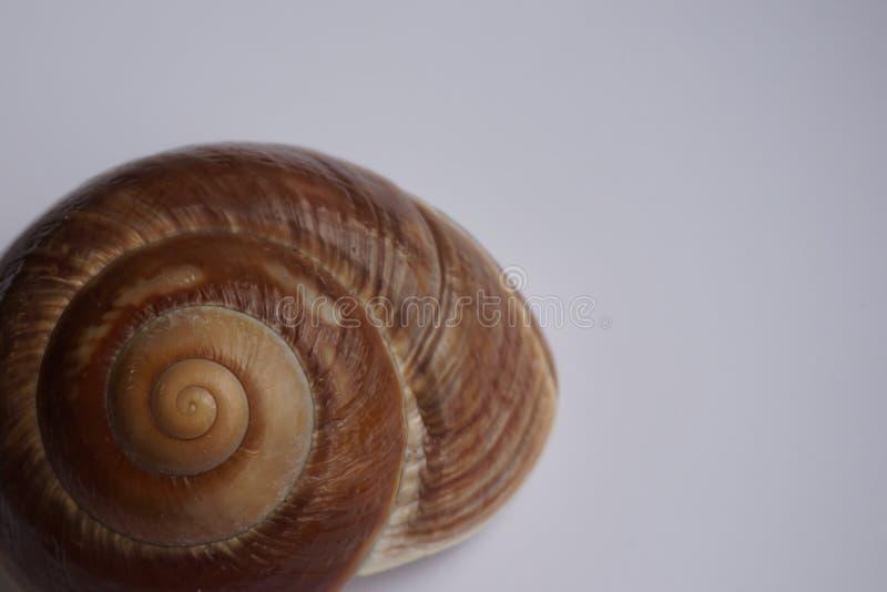 don, zbierania zna moją skorupę ślimaka t, zdjęcia stock