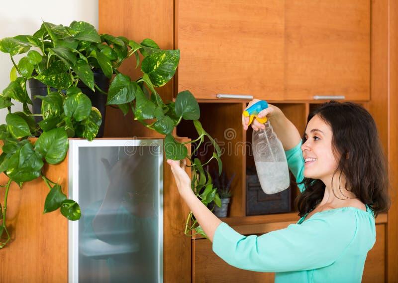 Dona de casa com houseplant do pulverizador imagens de stock