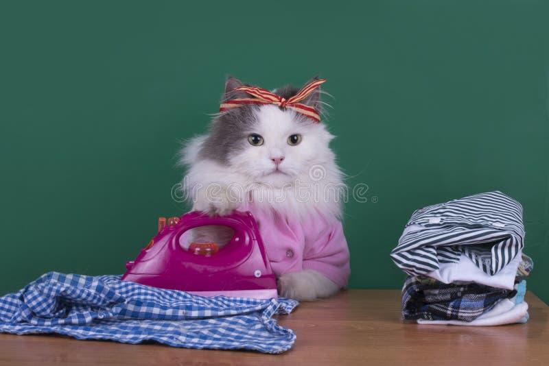 Dona de casa do gato para fazer trabalhos domésticos e roupa dos ferros fotografia de stock royalty free