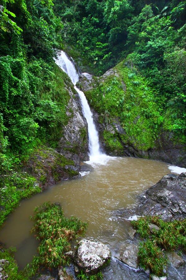Download Dona Juana Falls - Puerto Rico Stock Photo - Image of biology, ecology: 21578258
