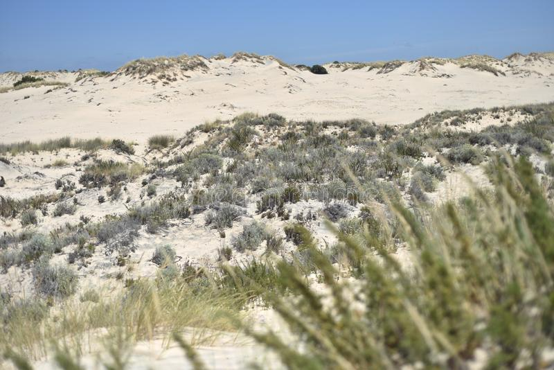 Donana National Park in Andalusia, Spain royalty free stock photos