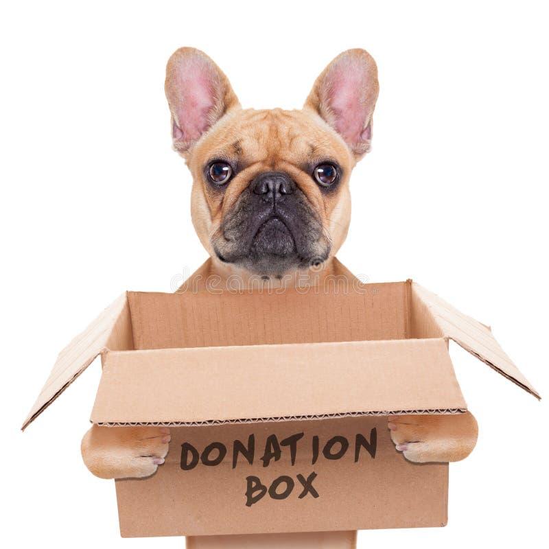 Donation box dog. French bulldog dog holding a donation box, isolated on white background