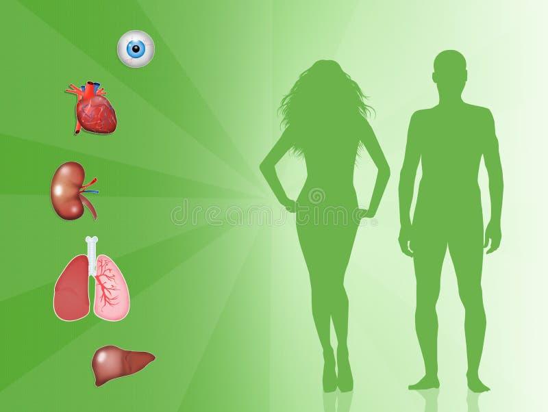 Donation d'organe illustration stock