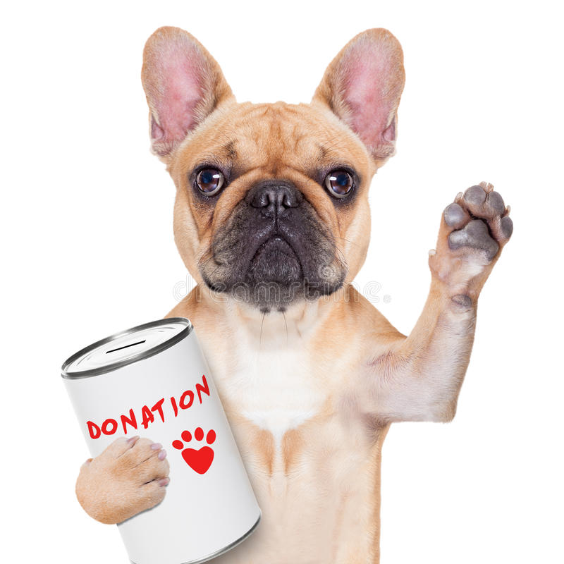 Donation dog. French bulldog dog with a donation can , collecting money for charity, isolated on white background