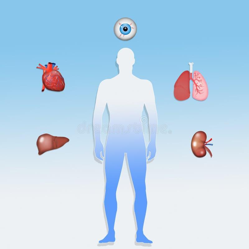 Donatore di organo per trapianto illustrazione vettoriale