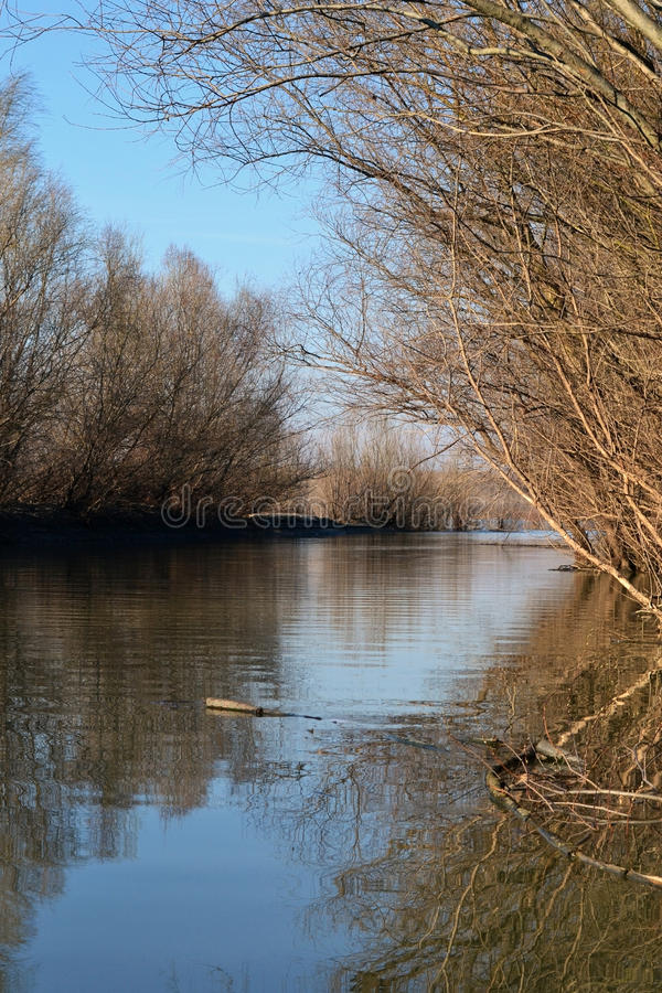 Donau-Floodplain stockbilder