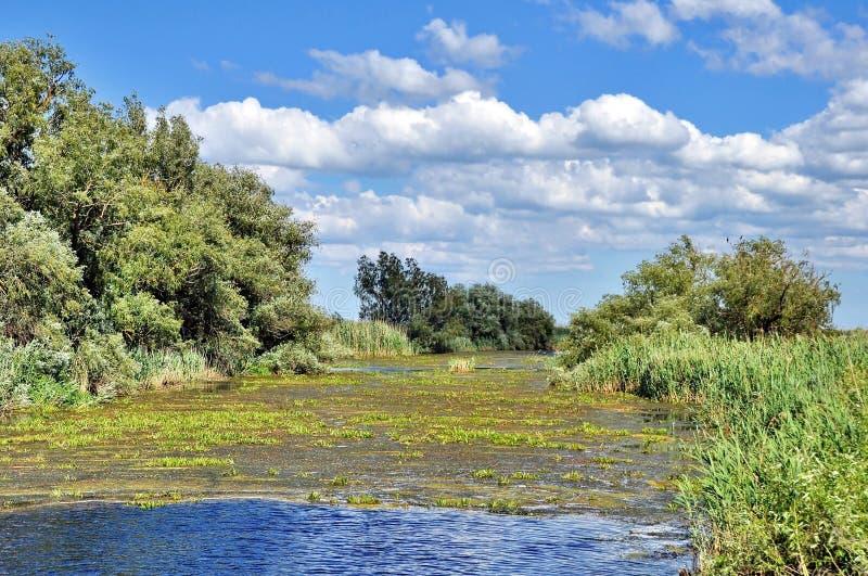 Donaudelta royaltyfria bilder