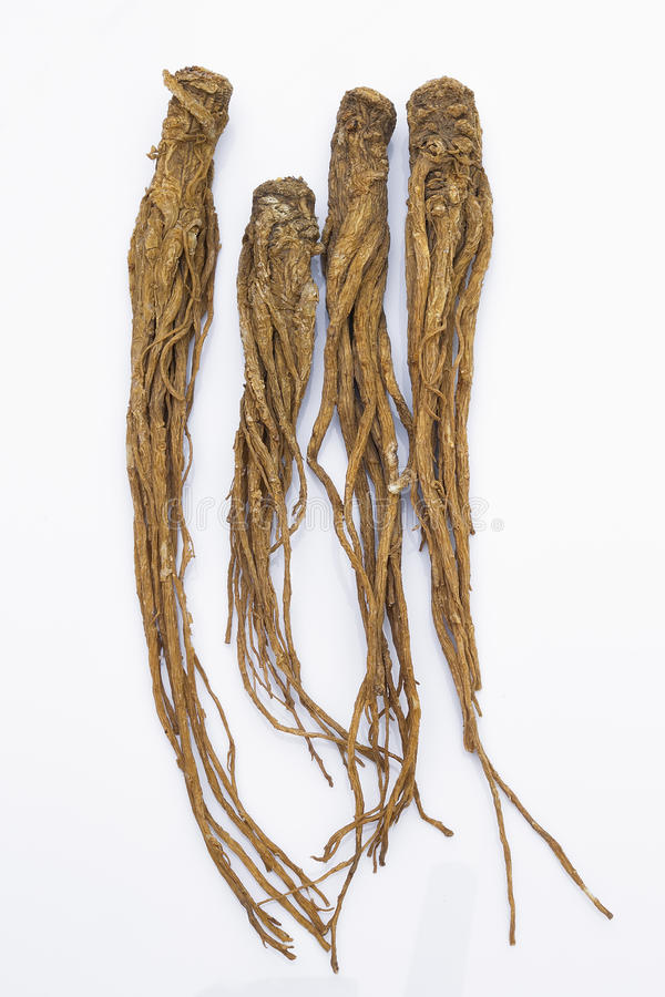 Quai (Angelica sinensis), also known as Dang Gui Ginseng. Quai (Angelica sinensis) on white background, also known as Dang Gui Ginseng. Chinese Herbal medicine ( stock photos