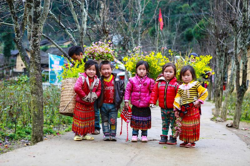 VAN, HA GIANG, VIETNAM, December 18th, 2017: Unidentified ethnic minority kids with baskets of rapeseed flower in Hagiang. Vietnam. Hagiang is a northernmost stock photos