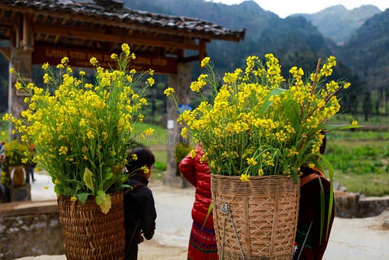 DONG VAN, HA GIANG, VIETNAM, le 1er janvier 2017 : La minorité ethnique non identifiée badine avec des paniers de fleur de graine images libres de droits