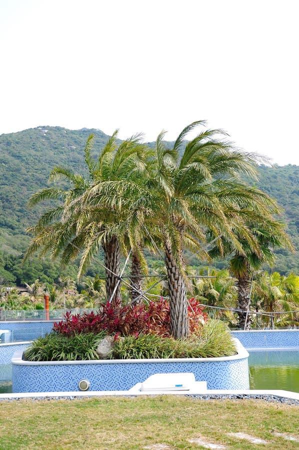 Dongao island scenery royalty free stock images