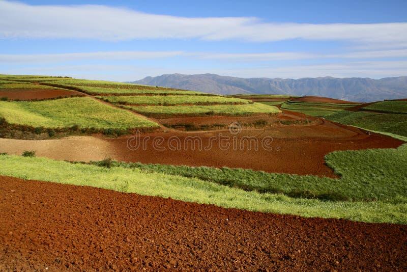 dongchuan红色土壤 免版税库存照片