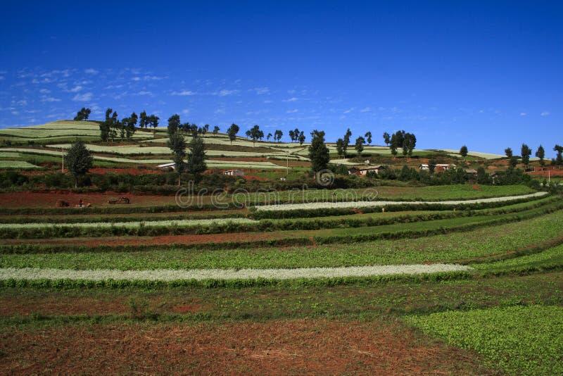 Dongchuan красная почва