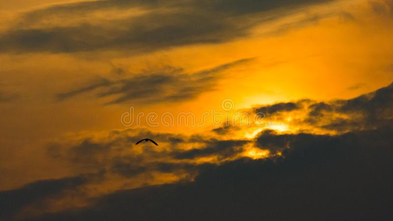 Dongqian Lake in the sunset royalty free stock image
