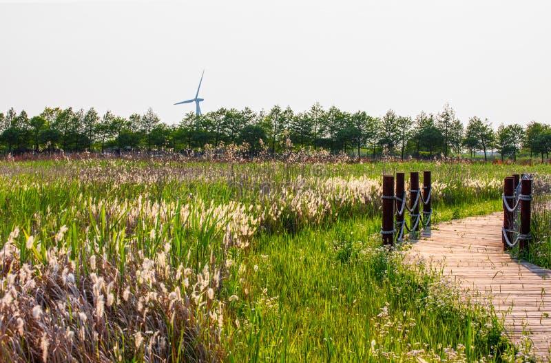 Dongtan våtmark parkerar på den Chongming ön fotografering för bildbyråer