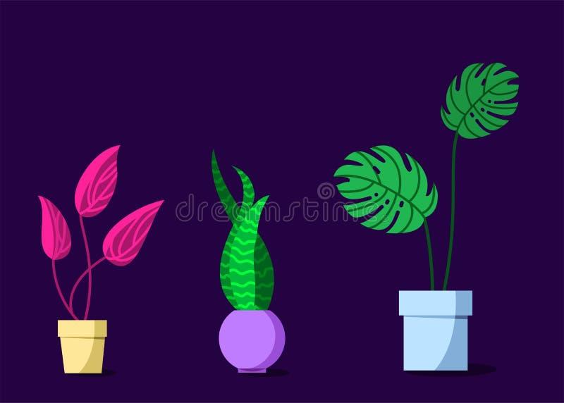 Doniczkowe rośliny Ustawiać ilustracja wektor