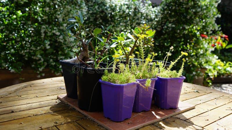 Doniczkowe rośliny na stole w nasłonecznionym podwórka patiu zdjęcie royalty free