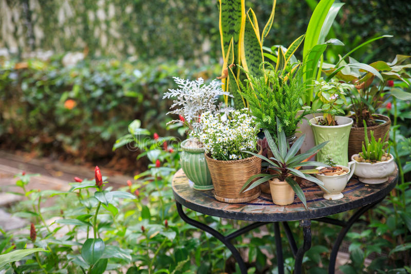 Doniczkowe rośliny w ogródzie obrazy stock